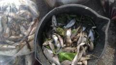 Już 395 kg śniętych ryb! Rzeka Dzierzgoń zatruta! Kto za to odpowiada?
