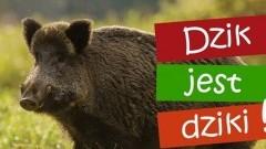 Urząd Miasta w Krynicy Morskiej ostrzega przed dzikami.