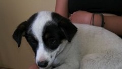 Sztutowo/ Kąty Rybackie: Pies szuka właściciela