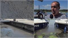 AKTUALIZACJA. Kto zanieczyszcza Nogat? Śmierdzący problem przy malborskiej marinie.