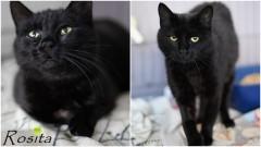 Kto przygarnie i pokocha kotkę o imieniu Rosita?