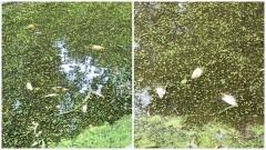 Malbork. Śnięte ryby w kanale Juranda – informuje mieszkaniec.
